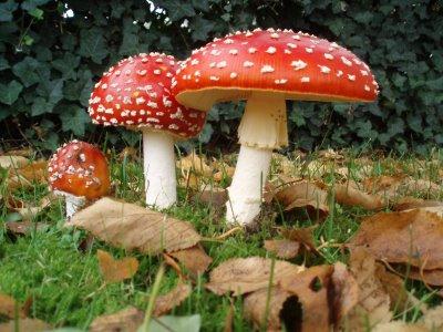 http://truthfrequencyradio.com/wp-content/uploads/2011/06/magic-mushrooms1.jpg